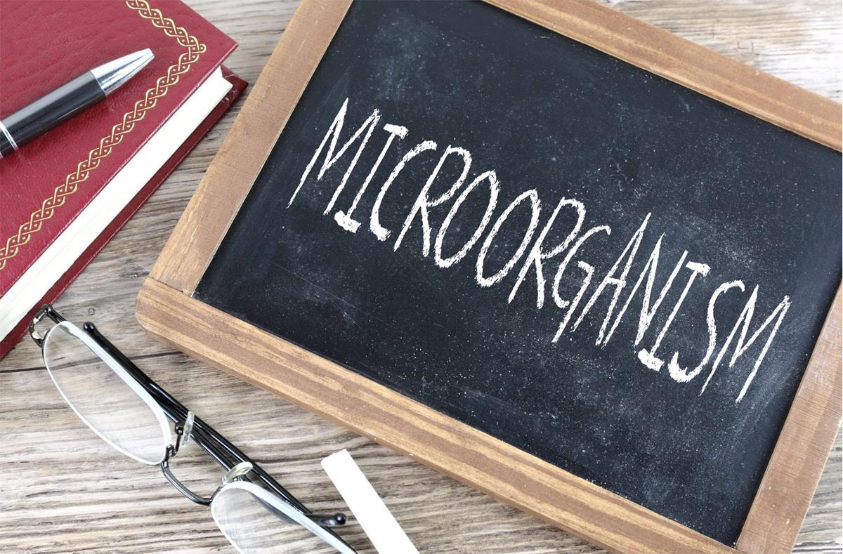 Microoragnism